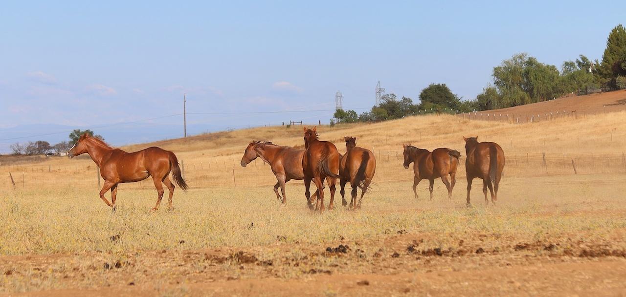 homejamesca-tehamacountyhorses